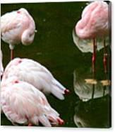 Flamingos 10 Canvas Print
