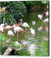 Flamingos 4 Canvas Print