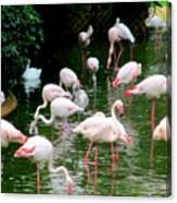 Flamingos 6 Canvas Print