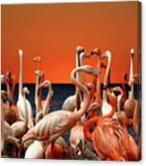 Flamingos At The Cape Canvas Print