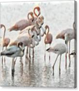 Flamingos Family Canvas Print