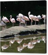 Flamingos With Reflection Canvas Print