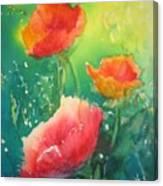 Flander's Poppies Canvas Print