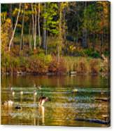 Flapping For Fall Canvas Print