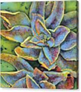 Flashy Succulent Canvas Print