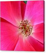 Flat Rose Hot Canvas Print