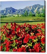 210546-v-flatirons And Flowers V  Canvas Print