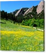 Flatirons And Yellow Meadow Canvas Print