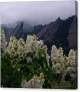 Flatirons White Lilacs Canvas Print