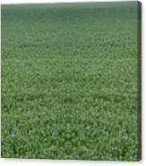Flax Canvas Print