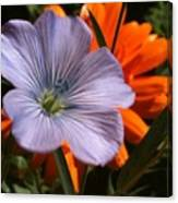 Flax And Aster Canvas Print