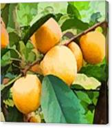 Fleshy Yellow Plums On The Branch Canvas Print