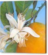 Fleurs d oranges Canvas Print