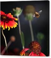 Flight Of A Honey Bee Canvas Print
