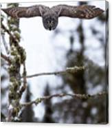 Flight Of The Great Gray Canvas Print