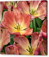 Flighty Tulips Canvas Print