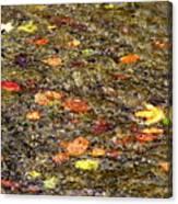 Floaties Canvas Print