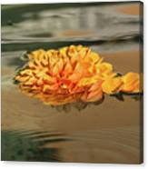 Floating Beauty - Hot Orange Chrysanthemum Blossom In A Silky Fountain Canvas Print