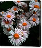 Floating Daisies Canvas Print