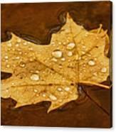 Floating Maple Leaf Txt Canvas Print