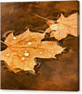 Floating Maple Leaves Pnt Canvas Print
