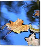Floating On The Reflected Sky Canvas Print