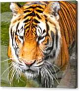 Floating Tiger Canvas Print