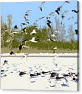 Flock Of Seagulls Canvas Print