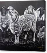 Flock Of Sheep Canvas Print