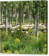 Flock Of Sheep Canvas Print