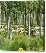 Flock Of Sheep With A Goat Canvas Print