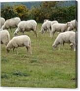 Flock Of Sheeps Canvas Print