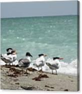 Flock Of Terns Gp Canvas Print