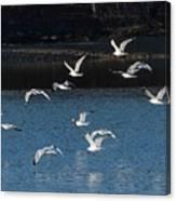 Flock Of Them Canvas Print