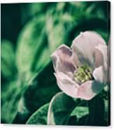 Flora 2821 Canvas Print