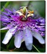 Flora Passiflora Canvas Print