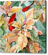 A Peachy Poinsettia Canvas Print