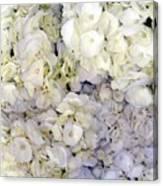 Florabunda Canvas Print