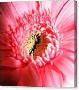 Floral 41 Canvas Print