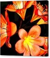 Floral 6019 Canvas Print