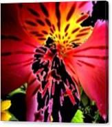 Floral 711 Canvas Print