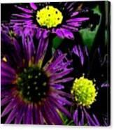 Floral 81 Canvas Print