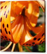 Floral Abstracts Art Prints Summer Tiger Lily Baslee Troutman  Canvas Print