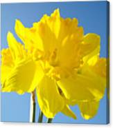 Floral Art Bright Yellow Daffodil Flowers Baslee Troutman Canvas Print