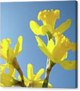 Floral Art Daffodil Flowers Spring Prints Blue Sky Baslee Troutman Canvas Print