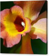 Floral Art - Intimate Orchid 3 - Sharon Cummings Canvas Print