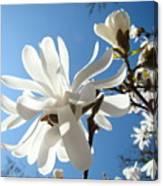 Floral Art Print Landscape Magnolia Tree Flowers White Baslee Troutman Canvas Print