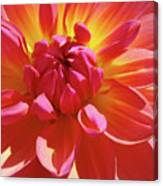 Floral Art Prints Orange Pink Dahlia Flower Baslee Troutman Canvas Print