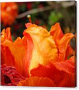 Floral Art Prints Orange Rhodies Rhododendrons Baslee Troutman Canvas Print