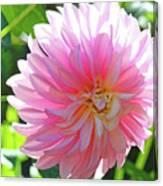 Floral Art Prints Pink Dahlias Sunlit Baslee Troutman Canvas Print